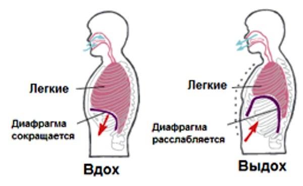 вокальная опора